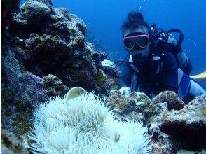 【Okinawa · Miyakojima departure · Irabejima】 Experience diving going to Irabejima by cruising
