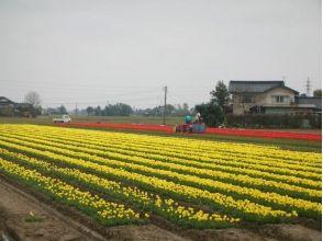 【富山・砺波】電動アシスト付自転車で巡る!となみ野を旅するガイドツアー