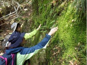 [奈良吉野]苔步行(KI阿魯苔)在路萬葉 - 川上村,松苔觀察和玻璃容器製作 - 的圖像