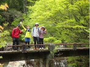 【奈良・吉野】苔歩き(こけあるき) in 最奥の古道~緑いっぱいの原生林で癒しの休日~の画像