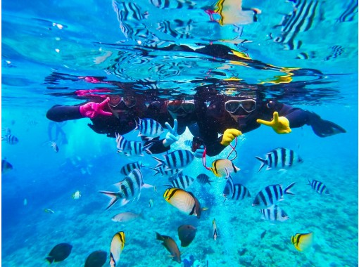 [Okinawa, impression, snorkel] Enjoy feeding coral reefs and tropical fish! Popular GoPro Photos & Videos Free ★ Super Rare! Local Okinawan Guide ★の紹介画像