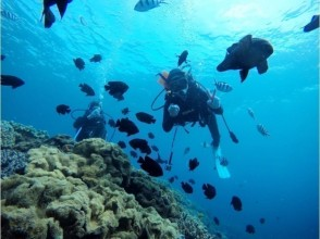 【Okinawa · Impressive Experience Diving】 Feeding tour of coral reefs and tropical fish! Underwater picture Free ♪ Okinawa people guide ♪