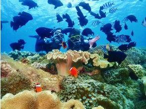 [오키나와 · 감동 · 체험 다이빙] 산호초와 열대어 먹이주기 만끽! 전체 전세! 인기 GoPro 사진 및 동영상 무료 ★ 격 레어! 지역 오키나와 사람 가이드 ★