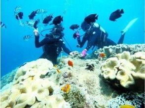 【沖縄・感動体験ダイビング】サンゴ礁と熱帯魚の餌付け満喫!完全貸切♪ 写真&動画無料♪ 沖縄人ガイド