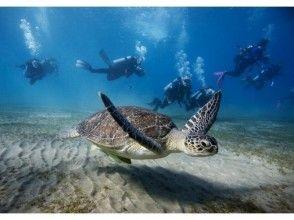 【沖縄・感動ファンダイビング】沖縄の心に残る水中世界へ!水中写真・機材レンタル無料♪沖縄人ガイド♪の画像