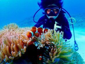 [오키나와 · 감동 · 팬 다이빙] 산호초와 열대어 먹이주기 만끽! 인기 GoPro 사진 및 동영상 무료 ★ 격 레어! 지역 오키나와 사람 가이드 ★