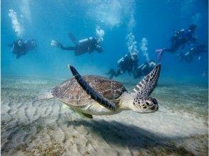 【沖縄・感動ファンダイビング】心に残る水中世界へ!写真&動画無料♪ 機材レンタル無料♪沖縄人ガイド♪