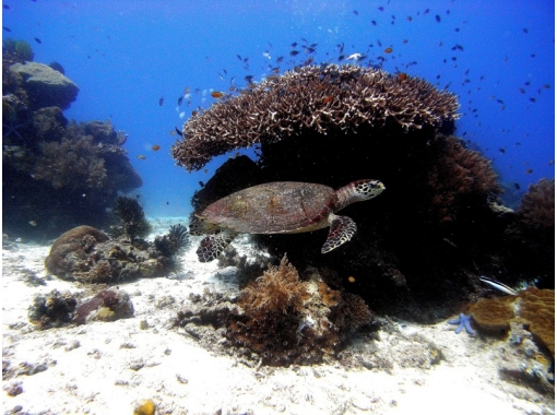 【京都・福井・和歌山】初級ダイビングライセンスコース4日間!水深18mの世界へ ♪