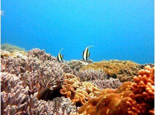 【京都・烏丸三条】体験ダイビング!水深5mプールでダイビングにふれてみたい方 ♪