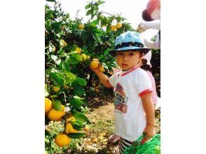 [大阪,貝塚市的時間是無限的!橘子狩獵所有你可以吃的♪形象