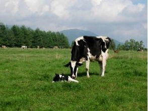 """[北海道Tokachishimizu]乳品體驗""""像!""""不是日本的""""牧場"""