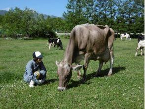 【北海道・十勝清水】「日本じゃないみたい!」な牧場で牛たちの世界を訪問!★選べるアイス付き★の画像