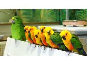 """[淺草,東京]鳥的超過100只的""""網吧淺草的鳥是""""熱烈歡迎! 60分鐘當然!"""