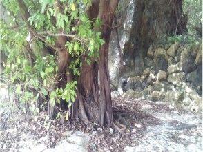 【沖縄】女子旅!パワースポットでのスピリチュアルヒーリングエネルギーを受け取る(女性限定)の画像