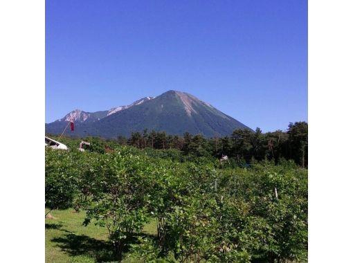 【鳥取・大山】ブルーベリー摘み取り食べ放題&ジャム作り体験プラン ♪の紹介画像