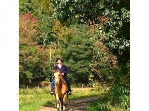 【兵庫・篠山】秋の紅葉 初心者森林浴外乗★白馬で森林を散歩の画像