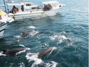 [熊本/天草]我們一起去見野生海豚吧!海豚觀賞和用餐套餐!