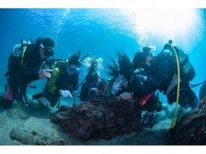 【鹿児島・南さつま市・桜島・坊津・錦江湾】透明度の高い海で体験ダイビング!水中写真プレゼント中の画像