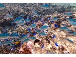【沖縄・嘉手納】ビーチシュノーケリング☆珊瑚お魚コースの画像