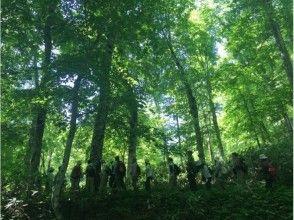 【北海道・黒松内町】四季のブナ林ガイドウォーク(90分コース)の画像