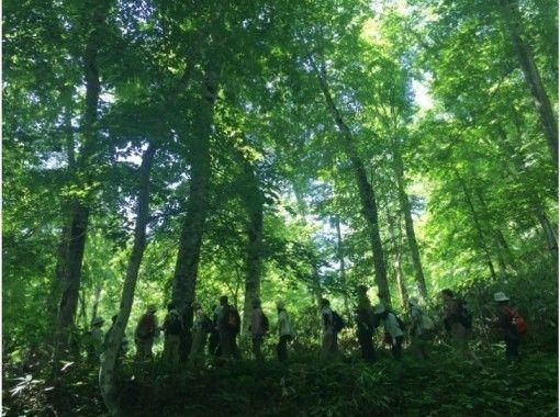 【北海道・黒松内町】四季のブナ林ガイドウォーク(90分コース)