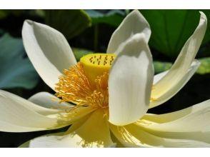 京都で開花ワークショップ★日本の香文化を取り入れた新感覚ワークショップ!の画像