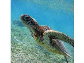 電暈對策店鋪! [宮古島/浮潛]海龜搜索浮潛旅行商店,處理地區共同優惠券
