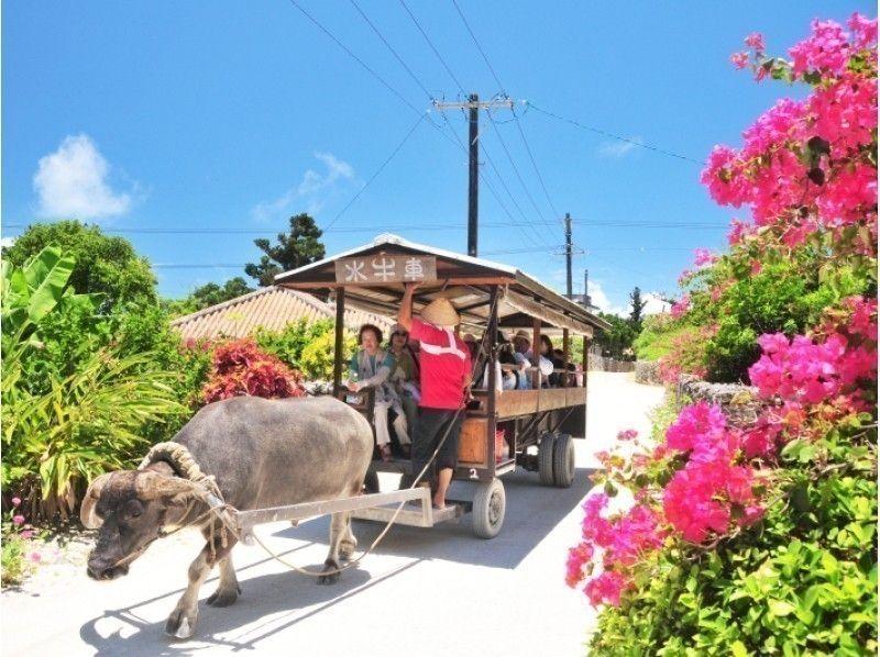 石垣島 おすすめ 観光ツアー