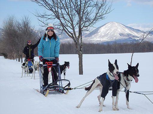 Hokkaido dog sledding experience