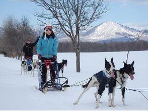【北海道・十勝】犬ぞりレースにチャレンジ!1人乗り犬ぞり体験(半日コース・経験者・2名~)の画像