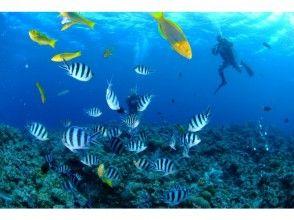 【沖縄・恩納村】ボートで行く!青の洞窟体験ダイビング♪