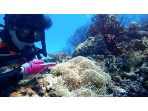 【リピーター続出!】島1番の海を誇る『パナリ』&竜宮城体験ダイビングツアー『1コース』(石垣島発着)の画像