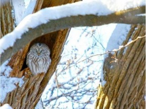 【北海道・札幌】エゾフクロウの棲む冬の森スノーシュートレッキングの画像