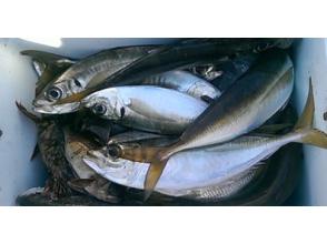 """[Tokyo at Haneda] riding together ship Tokyo Wankai fishing Attack! """"Light horse mackerel"""" sailing from Haneda Airport!"""