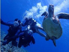 【地域共通クーポンご利用可能!】水中写真・動画無料プレゼント!慶良間半日体験ダイビング(2ダイブ)コース