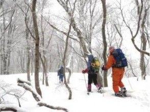 【北海道・黒松内町】歌才ブナ林スノーシュー体験(120分コース)の画像