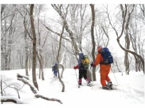 """[Hokkaido Kuromatsunai-machi] Giant tree watching experience """"Selectable 2 course"""" Guided by a village residence in the northern limit of beech!"""