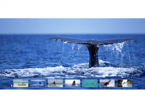 """[Okinawa Onna] Popular set plan """"fly board all-you-can-eat &Whale watching"""""""