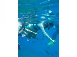 【沖縄・慶良間】大珊瑚礁シュノーケリングプラン(餌付け体験付き)の画像