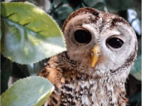【Tokyo · Ueno】 Owl Cafe 2 minutes on foot from the station ♪ Enjoy time to meet owls in a calm space! Image of