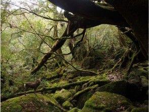 【装備無料レンタル付き】3時間でもののけ姫の世界へご案内!白谷雲水峽苔むす森ツアーの画像