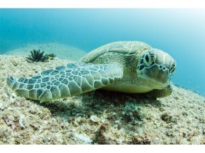 ウミガメを探しに行こう! 【最大6名様までの少人数制】サンゴ礁ビーチシュノーケリング2時間コース