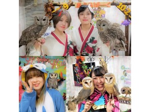 [Tokyo / Ikebukuro Animal Cafe] Experience the contact experience with Tokyo Owl Cafe & Hedgehog at the same time! (Weekdays: unlimited time) 3 minutes walk from the west exit of Ikebukuro station!
