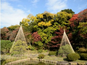 Autumn leaves viewing bus tour of Otakuro Park · Higo Hosokawa garden ~ Meal at Nihonbashi established store · Yutaro Setsuki flower 【11349】