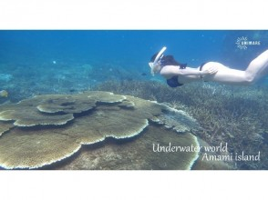 【Kagoshima · Amami Oshima】 Image of one day tour of skin diving & experience dive