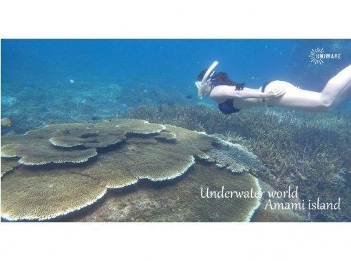 【鹿児島・奄美大島】スキンダイビング&体験ダイビングの1日ツアー