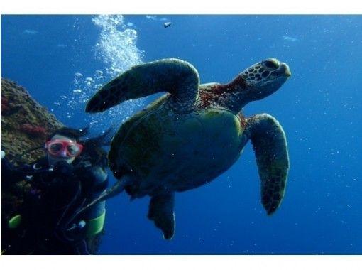宮古島ダイビング アクアテックアドベンチャー