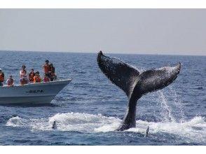 [Okinawa headquarters] winter only! 98% encounter rate! half-day Whale watching from Motobu Port-Churaumi Aquarium Ticket!