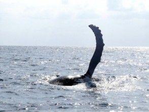 【沖縄・本部発】迫力満点!美ら海 ホエールウォッチング&シュノーケルの画像