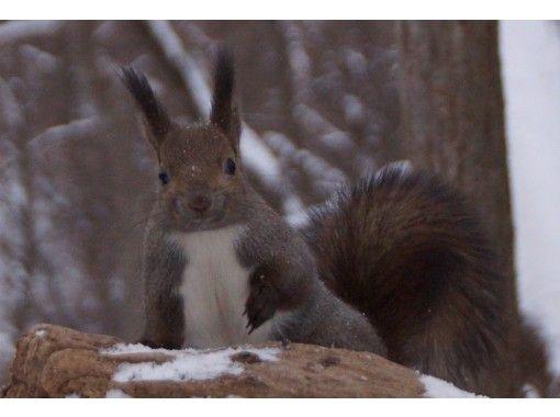 [홋카이도·삿포로] 다람쥐 · 딱따구리가 사는 북국의 숲 스노우 하이킹 투어の紹介画像